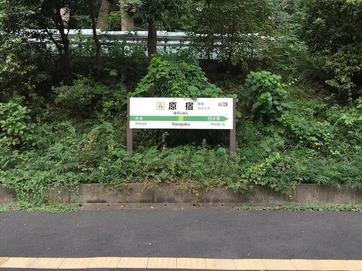 原宿草ぼうぼう.jpg