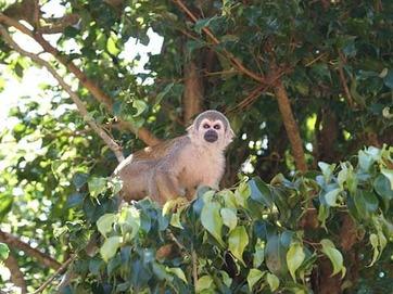 monkey-365794_640.jpg