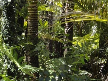 rainforest-78516_640.jpg